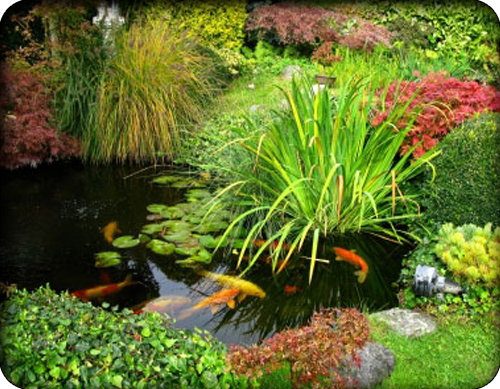 Water gardens ponds pumps the watershed water systems for Outdoor fish pond pumps