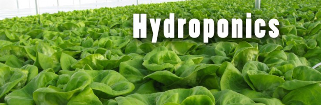 Hydroponic Home Grown Food